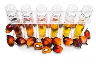 Biodiesel: il consumo di olio di palma è in forte aumento